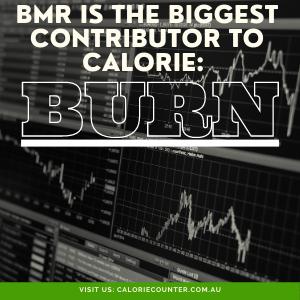 BMR causes Calorie Burn
