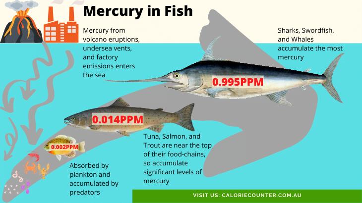 Mercury in Fish like Salmon