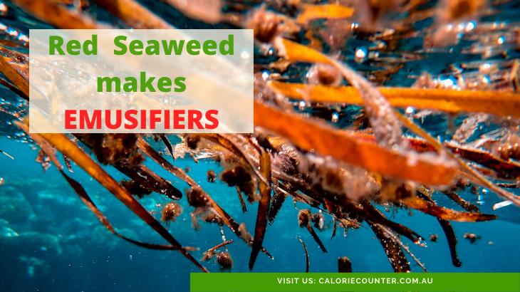 seaweed makes emulsifiers