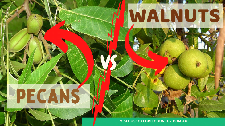 Pecan compared to Walnut