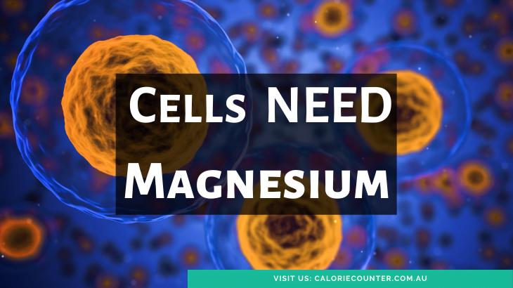 Cells need Magnesium